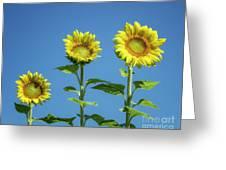 Sunny Skies Greeting Card
