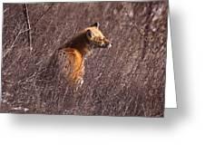 Sunny Soaked Fox Greeting Card