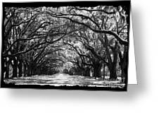 Sunny Southern Day - Black And White With Black Border Greeting Card