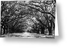 Sunny Southern Day - Black And White Greeting Card