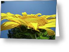 Sunny Summer Sunflowers Floral Art Baslee Troutman Greeting Card