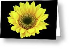 Sunny Sunflower Black Yellow Greeting Card