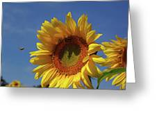 Sunny Sunflower Soloist With Backup Chorus Greeting Card
