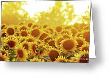 Sunny Sunflower Sunset Greeting Card
