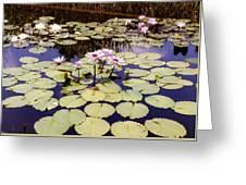 Sunny Waterlilies Greeting Card