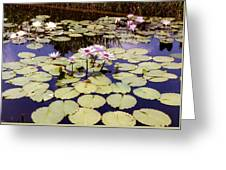 Sunny Waterlilies Greeting Card