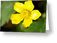 Sunny Yellow Cinquefoil Greeting Card