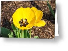 Sunny Yellow Tulips Greeting Card