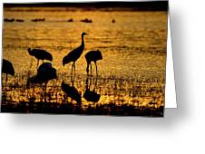 Sunrise At The Crane Pools Greeting Card