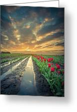 Sunrise At Tulip Filed After A Storm Greeting Card