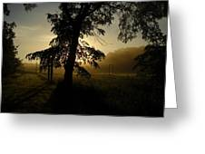 Sunrise Behind Elm Tree Greeting Card