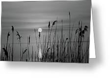 Sunrise Black And White  Greeting Card