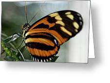 Sunrise Butterfly Greeting Card