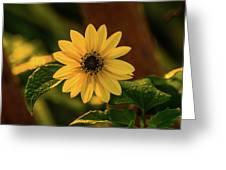 Sunrise Daisy Delray Beach Florida Greeting Card