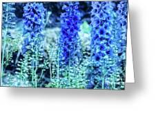 Sunrise Delphiniums Greeting Card
