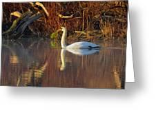 Sunrise Elegance In The Mist Greeting Card