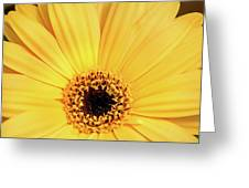 Sunrise Gerbera Greeting Card