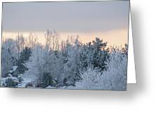 Sunrise Glos Behind Trees Frozen Trees Greeting Card