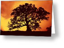 Sunrise Gum Greeting Card