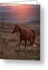 Sunrise Horse Greeting Card
