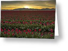 Sunrise In Skagit Valley Greeting Card