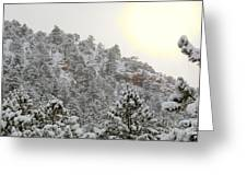 Sunrise In Snowstorm In The Pike National Forest Greeting Card