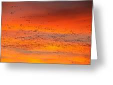 Sunrise Migration Greeting Card