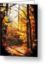Sunrise Mist Through The Trees Greeting Card