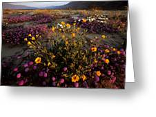 Sunrise On Desert Wildflowers Greeting Card