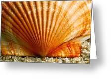 Sunrise On Shell Greeting Card
