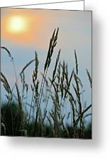 Sunrise Over Grass Greeting Card