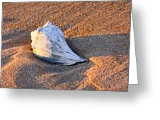 Sunrise Seashell Greeting Card