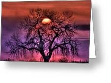 Sunrise Through The Foggy Tree Greeting Card