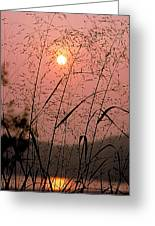 Sunrise Through The Tall Grass Greeting Card