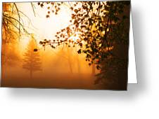Sunrise Trees Fog Greeting Card