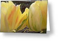 Sunrise Tulips Greeting Card