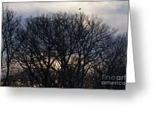 Sunrise With Bird Greeting Card