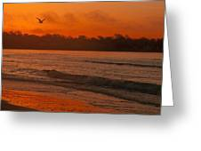 Sunrise With Seagull Greeting Card