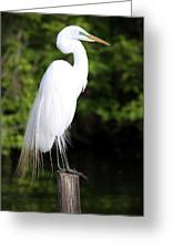 Sunrise With The Egret  Greeting Card