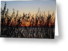 Sunrise2 Greeting Card