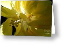 Suns Glare Greeting Card