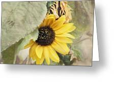 Last Sunflower Greeting Card