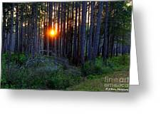 Sunset Along The Florida Trail - St.marks Greeting Card