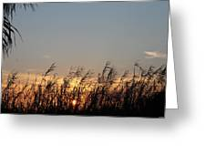 Sunset And Palm Grass Greeting Card