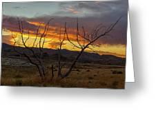 Sunset And Petrified Tree Greeting Card