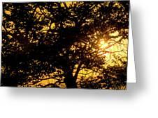 Sunset And Trees - San Salvador I Greeting Card
