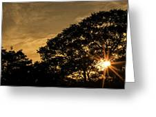 Sunset And Trees - San Salvador Greeting Card