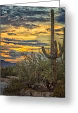 Sunset Approaches - Arizona Sonoran Desert Greeting Card