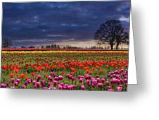 Sunset At Colorful Tulip Field Greeting Card