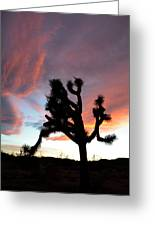 Sunset At Joshua Tree 2 Greeting Card